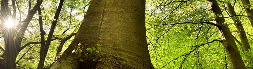 Bild: Holzarten